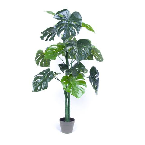 POTTED MONSTERA 120CM