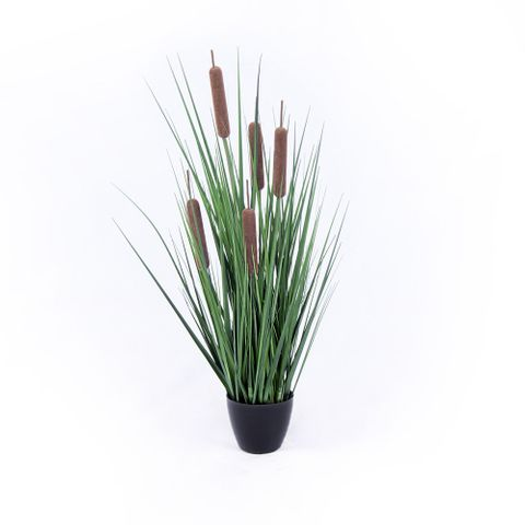POTTED ONION GRASS REED 60CM