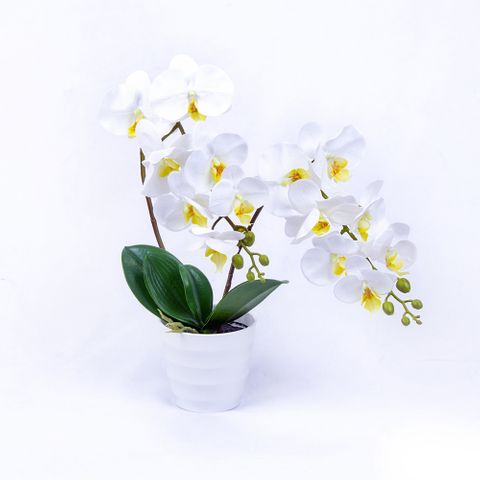 POTTED ORCHID 60CM