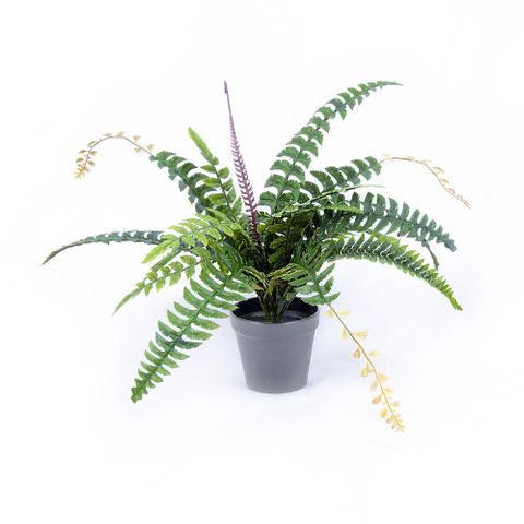 POTTED FERN 50CM