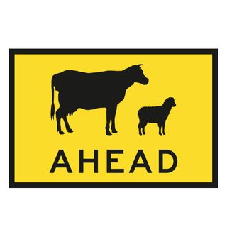 1500 x 900mm Cows Ahead Picture Sign