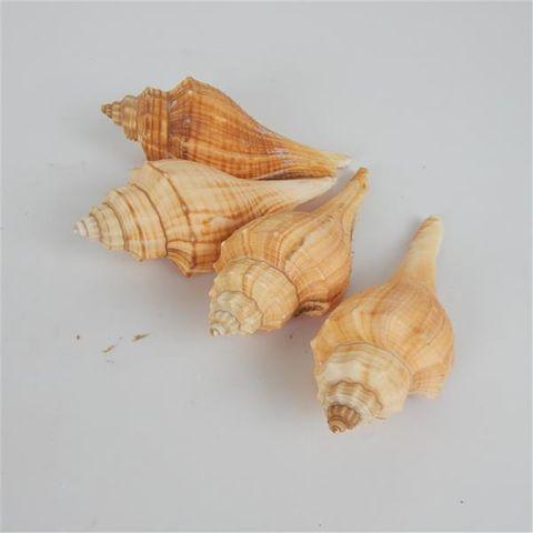 Shells Orange 4pcs Approx 8cm